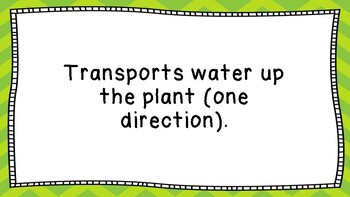 Transport in Plants - Multi-Use Resource