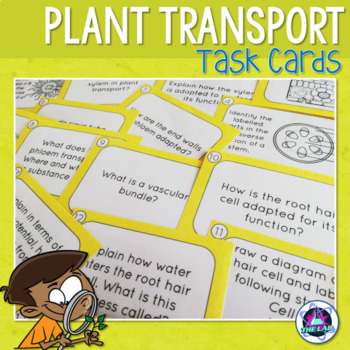 Transport in Plants Task Cards