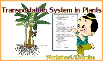 Transport in Plants  Xylem / Phloem  Worksheet