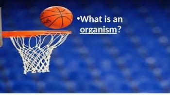 Trashcan Basketball Review- GA Regions and Habitats