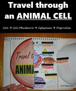 Travel through an ANIMAL CELL