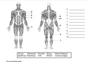 Muscles and Bones Webquest