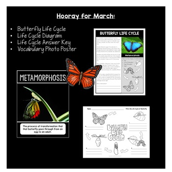 March Freebie: Butterfly Life Cycle
