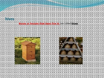Treasures Animal Homes Vocabulary PowerPoint