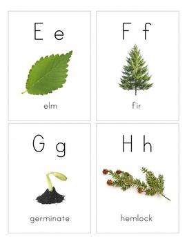 Tree Alphabet- Naturalist Montessori Alphabet