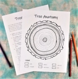 Tree Anatomy: color your own tree trunk diagram - botany activity