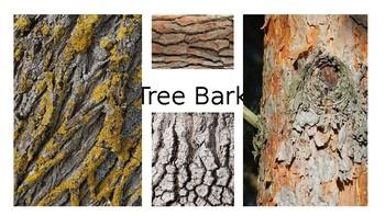 Tree Bark Photo Library Bank for Art Teachers
