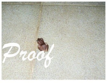 Tree Frog Stock Photos