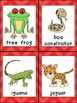 Tree Frog, What Do You See Emergent Reader and Pocket Char