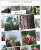 Tree Identification Cards: Set 1