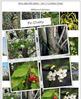 Tree Identification Cards: Set 3