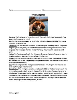 Tree Kangaroo - Article Information Facts - Questions Vocabulary Activities