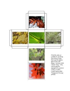 Tree Leaf Dice