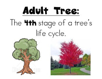 Tree Life Cycle Vocab Cards