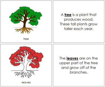 Tree Nomenclature Book (Red)