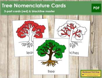 Tree Nomenclature Cards (Red)