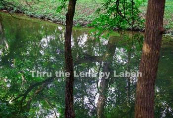 Tree Reflection Stock Photo #157