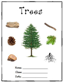 Tree Research Project