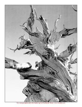 Monart Drawing Project:Tree Roots Shading Project