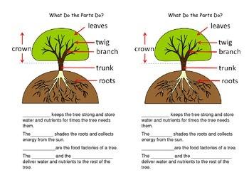 Tree Science Journal