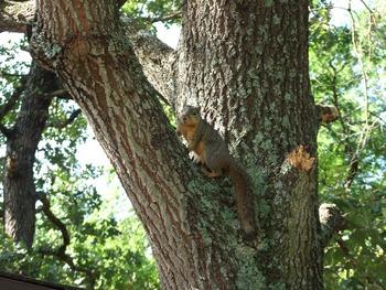 Tree Squirrel 1