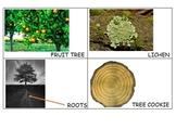 Tree Study Creative Curriculum Interactive Word Wall Cards