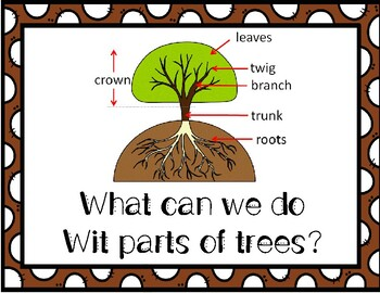 Tree Study Question of the Day Investigation 6