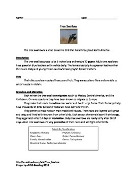 Tree Swallow - Bird review article information facts questions vocabulary