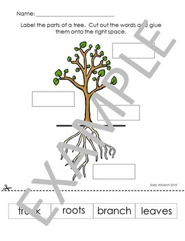 Tree Unit Worksheets and Activities