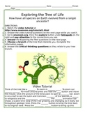Tree of Life: A web interactive project