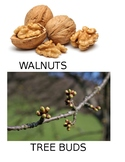 Tree study creative curriculum vocabulary cards