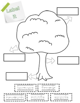 Trees Cross curricular exploration pack