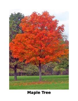Trees - Informative Photos