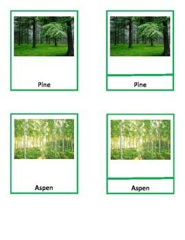Trees, Montessori 3-Part Cards