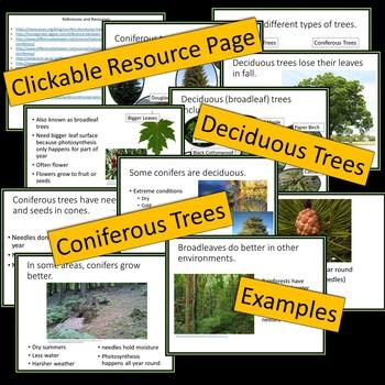 Trees -- Powerpoint Presentation