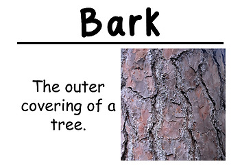Trees and Weather Science Vocabulary Cards