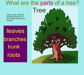 Trees Smartboard Bundle