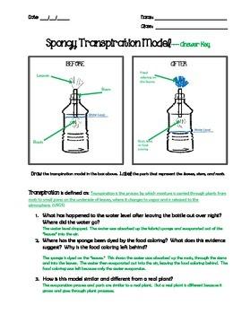 Trees Sweat?!: Transpiration Model