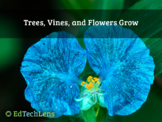 Trees, Vines, and Flowers Grow in Rainforests PDF