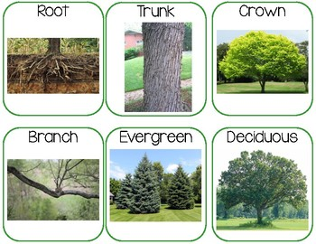 Trees Word Wall & Questions of the Week