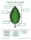 Trees and Leaves Activity Pack
