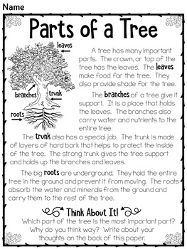 Trees for Primary Grades
