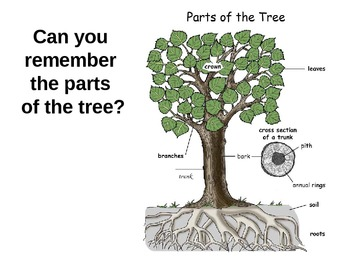 Trees theme unit