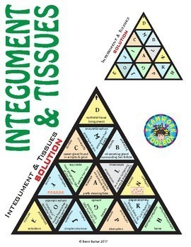Triominos Puzzle ~TISSUES & INTEGUMENTARY SYSTEM~ Biology & Anatomy