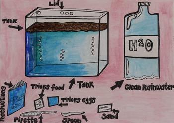 Triops School Project
