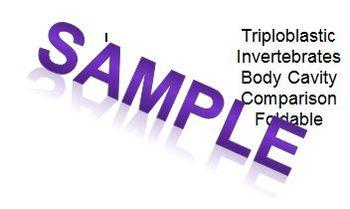 Triploblastic Invertebrate Body Cavity Comparison Foldable