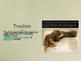 Troodons Powerpoint
