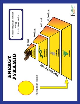 Energy Pyramid Diagram