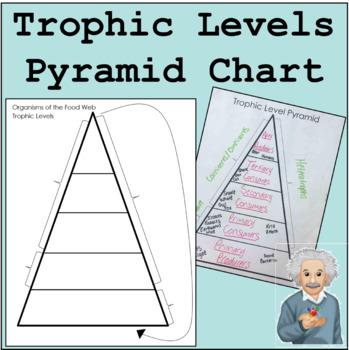 Trophic Levels Pyramid Chart