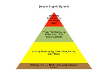 Trophic Pie Lesson Plan